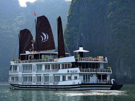 Pelican-cruise